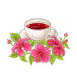 hibiscus tea vector image vector image