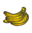 banana fruits color sketch engraving vector image vector image