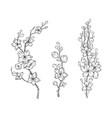 cherry flower blossom botanical art set spring vector image vector image