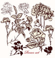 collection hand drawn roses vector image