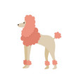 pink cartoon poodle drawing isolated on white vector image