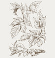 set of hip rose buds berry and branches vintage vector image