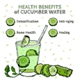 Cucumber Benefits Image vector image vector image