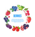 juicy and sweet berries round frame vector image