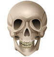 human skull anatomical drawing isolated on vector image vector image