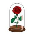 rose under glass cap pop art vector image