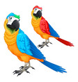 funny parrots in two different colors vector image
