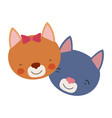 colorful caricature faces of cat couple animal vector image
