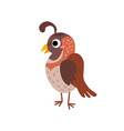 cute animals - quail vector image