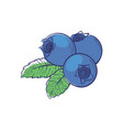 ripe blueberry isolated icon vector image