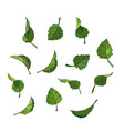 set of isolated green leaves icons vector image
