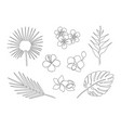 set one line drawing tropical plants vector image