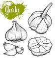 Garlic Set vector image vector image