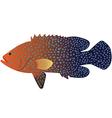 Coral Cod 01 vector image vector image