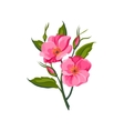 Dog Rose Hand Drawn Realistic vector image vector image