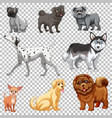 set different dogs isolated vector image vector image