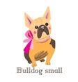 small bulldog vector image