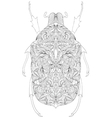 beetle on white background vector image vector image