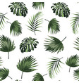 tropical jungle plants palm monstera leaves vector image vector image