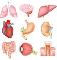 Cartoon of Internal organs anatomy vector image
