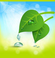 background with leaves and dew vector image vector image