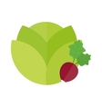 Green cabbage and red radish vegetable vegetarian vector image