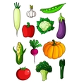 Assorted cartoon ripe vegetables on white vector image vector image