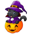 black cat dressed as witch on a halloween pumpkin vector image vector image