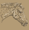 horse portrait-2 on brown background vector image vector image
