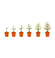 plant growth stages in in ceramic pot tree with vector image