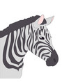 portrait of zebra drawing color vector image vector image