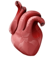 Realistic human heart Healthy internal organ vector image