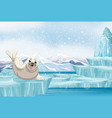 scene with seal on ice vector image vector image