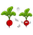Happy smiling cartoon radish vegetable vector image vector image