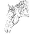 horse portrait-4 vector image vector image