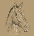 horse portrait-7 on brown background vector image vector image