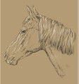 horse portrait-9 on brown background vector image