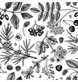 wild berries sketches seamless pattern hand drawn vector image