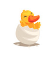 cute duckling baby hatching from egg vector image vector image