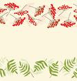 Rowan berry border vector image