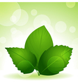 spring green leaves vector image vector image