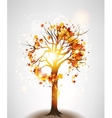 Autumn maple tree and sunlight vector image vector image