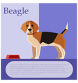 beagle colourful postcard vector image vector image