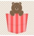cartoon teddy bear in pocket vector image vector image