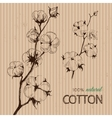 hand drawn cotton plants on cardboard vector image