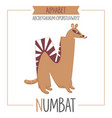 alphabet letter n and numbat vector image vector image