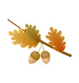 autumn oak branch with acorns and leaves on white vector image vector image