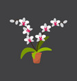 house plant white orchid in pot vector image vector image