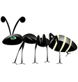 Insect ant on white vector image vector image
