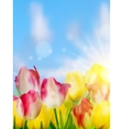 Purple and yellow tulips against the sky EPS 10 vector image vector image